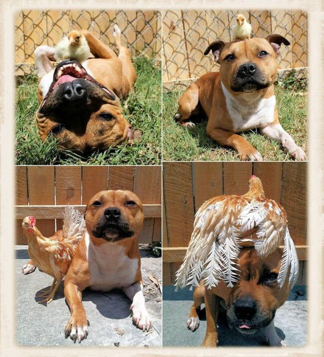 Σκύλος ζωάκια Γάτα