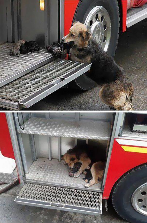 φωτιά σκυλίτσα