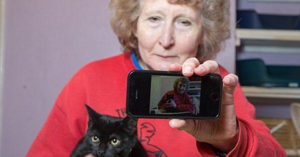 Οι μαύρες γάτες εγκαταλείπονται πιο εύκολα από τους ανθρώπους επειδή δεν βγαίνουν καλές στις selfies, λέει καταφύγιο ζώων