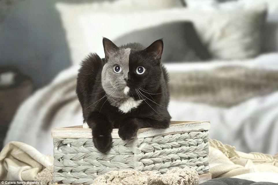 χρώμα γατάκι