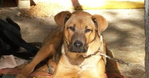 Καλαμάτα: Φυλάκιση 1 έτους και 5.000 ευρώ σε άντρα που κλότσησε σκύλο
