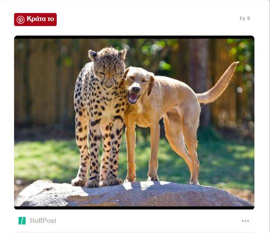 ζωϊκό βασίλειο ζώα
