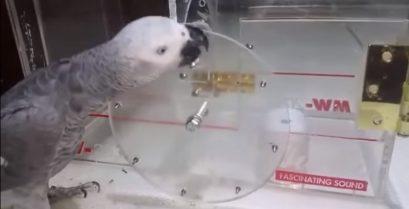 Ένας πολύ έξυπνος παπαγάλος