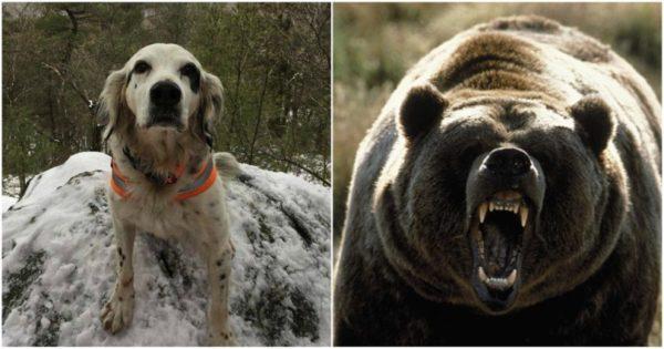Ήρωας: Ο Πιτ πέθανε για να σώσει το «αφεντικό» του από επίθεση αρκούδας