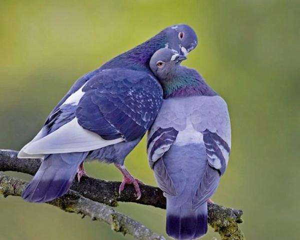 ζώα έρωτας