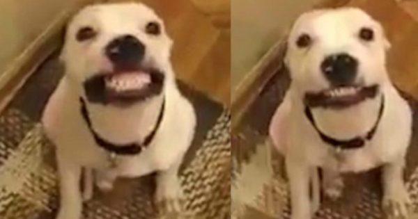 Αυτός ο σκύλος έχει… καλύτερο χαμόγελο από εσένα! (vid)