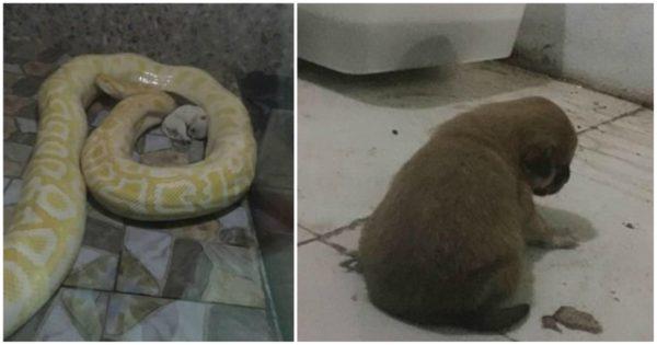 Ζωολογικός κήπος στην Κίνα έδινε κουτάβια για φαγητό σε πεινασμένους πύθωνες
