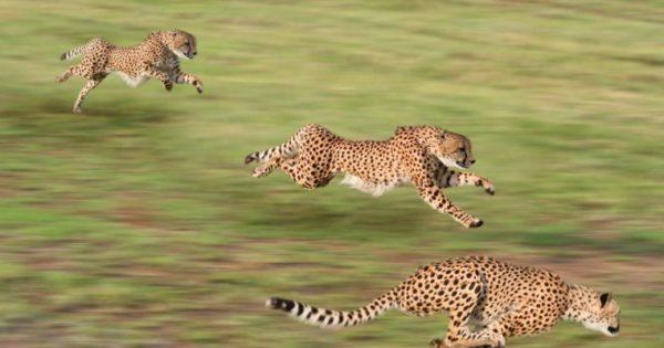 Βίντεο: Τα πιο γρήγορα ζώα στη γη!