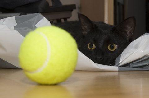 Το περίεργο παιχνίδι γάτας με μπαλάκι του τένις που την έκανε viral…  Video