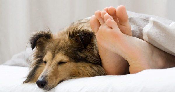 Μήπως να αρχίσεις να κοιμάσαι με το σκυλί σου;