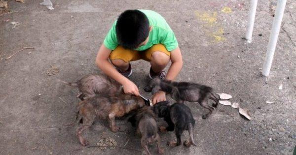 11χρονος έσωσε έξι αδέσποτα κουτάβια που λιμοκτονούσαν. Ένα χρόνο αργότερα είναι δύσκολο να πιστέψεις τι έφτιαξε