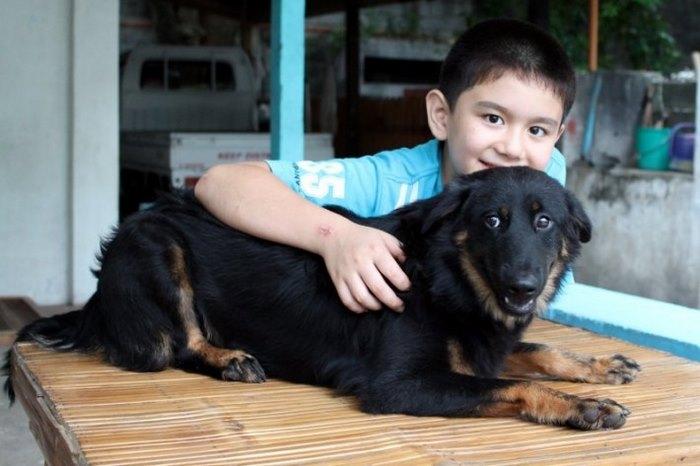 Σκύλος σκύλοι Αδέσποτα