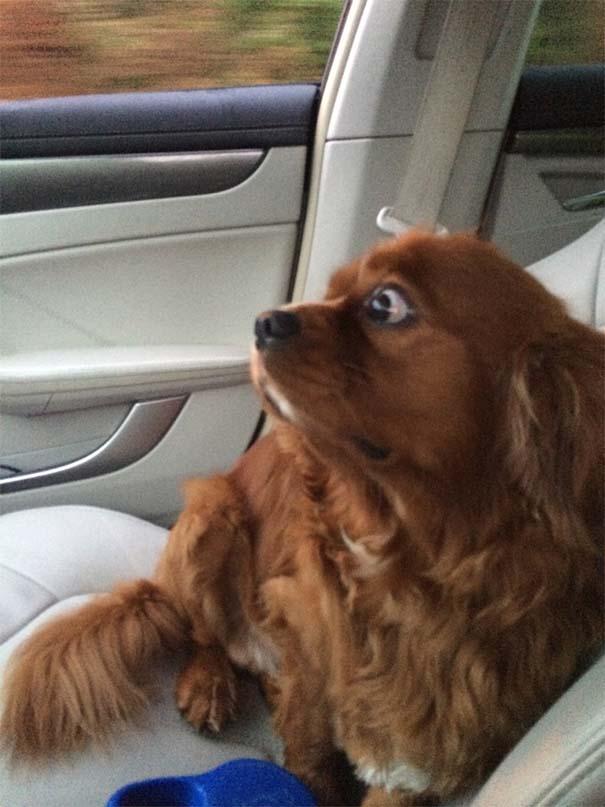σκύλος στον κτηνίατρο Σκύλος κτηνίατρος