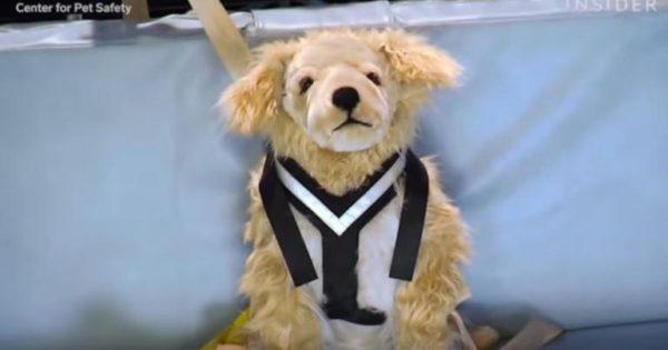 Βίντεο: Πώς ελέγχεται το αν είναι ασφαλή τα προϊόντα για σκύλους