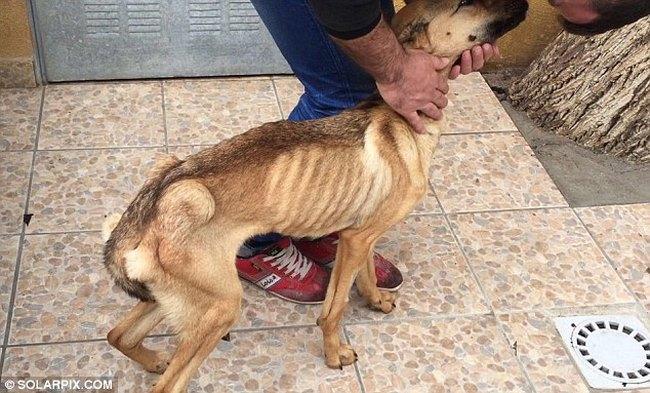 υιοθεσία αδέσποτων διάσωση σκύλων