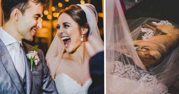 Αδέσποτος σκύλος εισέβαλε απρόσκλητος σε γάμο και άραξε πάνω στο πέπλο της νύφης την ώρα που αντάλλαζε όρκους