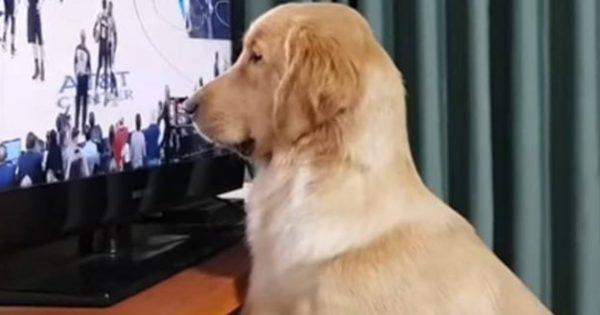 Ο πιο φανατικός σκύλος του NBA (βίντεο)