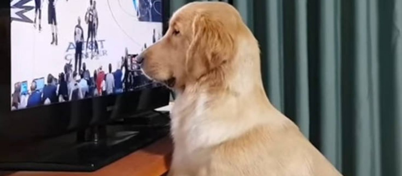 Σκύλος NBA