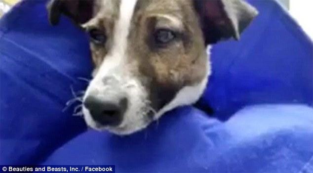 Σκύλος κουτάβι κακοποίηση σκύλου