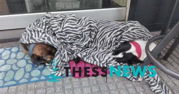 Ιδιοκτήτης καφετέριας στη Θεσσαλονίκη σκεπάζει με κουβέρτες αδέσποτα σκυλιά για να μην κρυώνουν
