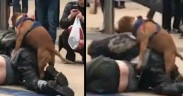 Video: Σκύλος με… κάψες διακόπτει καβγά δύο ανδρών με τον πιο απίθανο τρόπο!