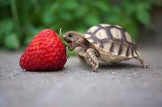 Δείτε ζώα που προσπαθούν να φάνε με τον δικό τους… τρόπο!