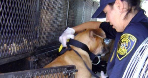 Υπογράφουμε για την ίδρυση Ελληνικής Αστυνομίας για τα Ζώα