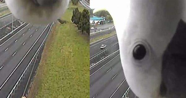 Το πιο αστείο βίντεο από κάμερα κυκλοφορίας που έχετε δει ποτέ σας