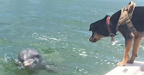 «Έλιωσαν» καρδιές από την τρυφερή φιλία σκυλίτσας με δελφίνι