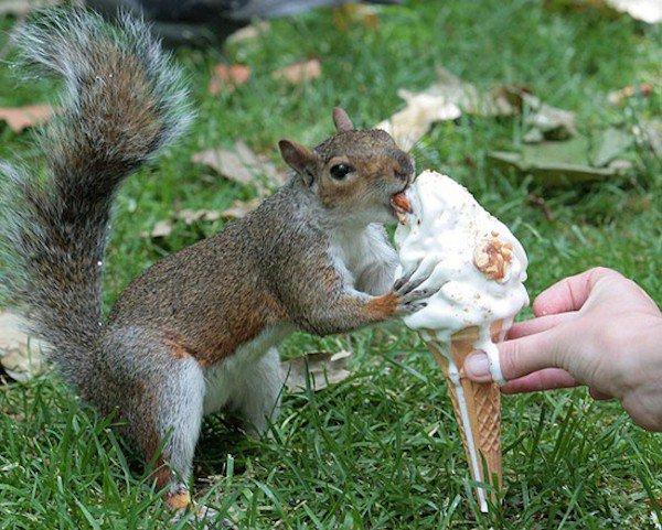 ζώα τρώνε