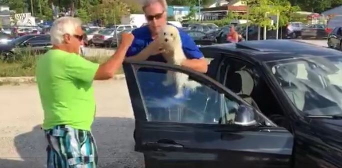 τζάμι αυτοκινήτου Σκύλος