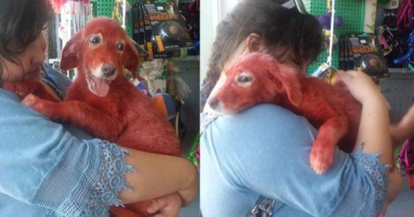 Το κουτάβι που έβαψαν με κόκκινη μπογιά στη Χαλκίδα έχει πλέον το δικό του σπίτι