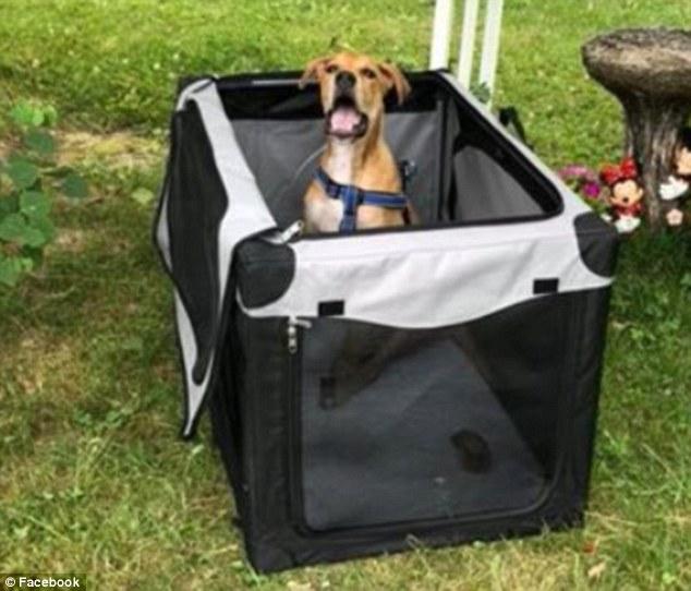 τραυματισμένος σκύλος ποδήλατο
