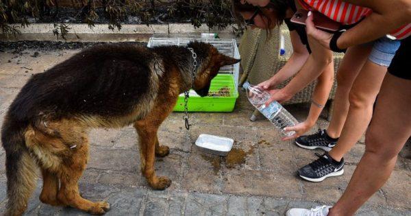 Εθελοντές φροντίζουν ζώα στο Μάτι, μετά την πύρινη λαίλαπα (εικόνες)