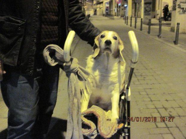 Παράλυτος σκύλος