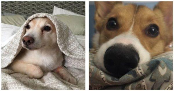 23 σκυλιά που ξυπνούν κάπως έτσι και μπορούν να σου φτιάξουν τη μέρα με μια μόνο γκριμάτσα!
