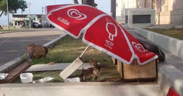 Θεσσαλονίκη: Περιπτεράς έστησε ολόκληρο «σπίτι» για τα αδέσποτα στο κέντρο