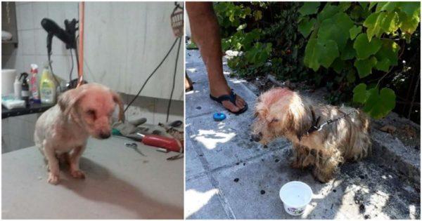 Φυλακή και πρόστιμο 30.000 ευρώ σε 62χρονο που έλουσε σκυλάκι με πετρέλαιο στην Κέρκυρα