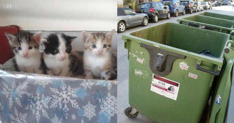 Πάτρα κακοποίηση ζώων γατάκια