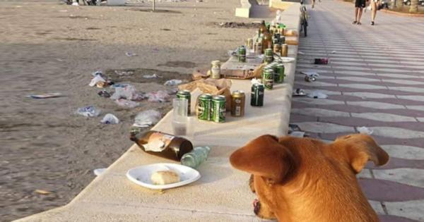 Οι άνθρωποι θα έπρεπε να απαγορεύονται από την παραλία.. Όχι οι σκύλοι