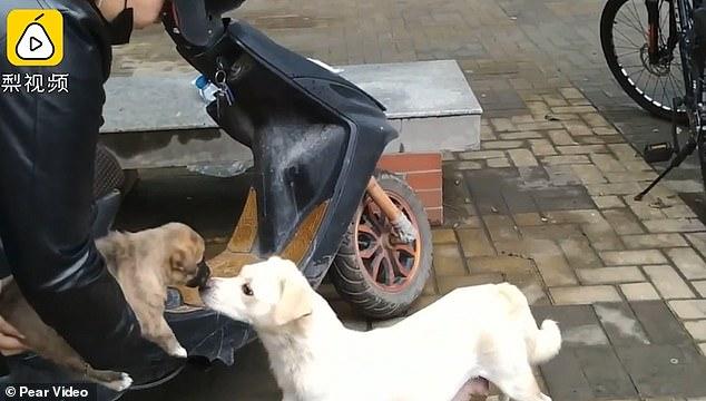 υιοθεσία αδέσποτων Σκύλος