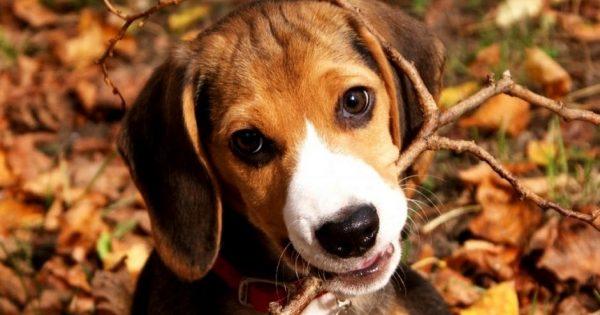Απίστευτη Αντίδραση: Αδέσποτος σκύλος υιοθετείται και λυγίζει… (VIDEO)