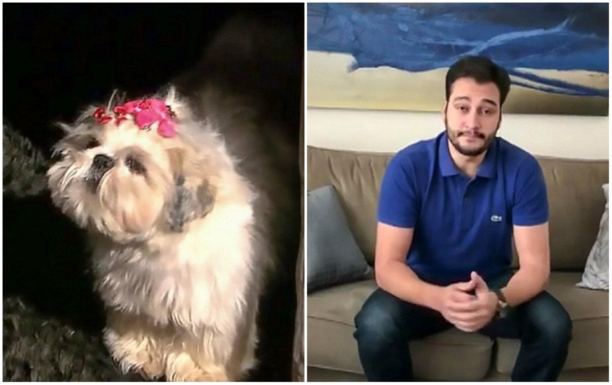 Σκύλος διάσωση