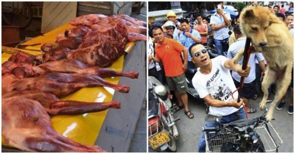 Η Νότια Κορέα αποφάσισε ότι είναι παράνομη η σφαγή σκύλων για το κρέας τους