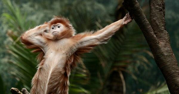 42 αστείες μαϊμούδες