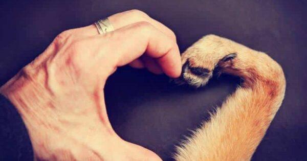 Σκύλος: Ο Καλύτερός Μας Φίλος Σε Όλες Τις Συνθήκες – Μας Κάνουν Να Νιώθουμε Όμορφα