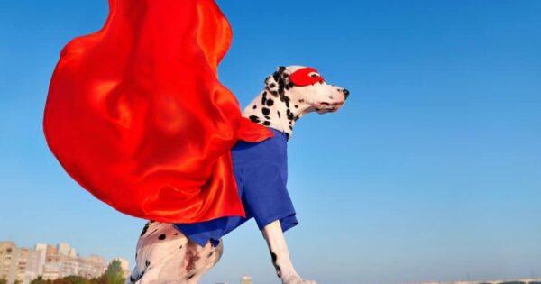 14 εξαιρετικά κοστούμια υπερηρώων για το σκύλο σας το 2021