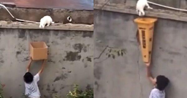 Γλυκό Αγόρι Διασώζει Παγιδευμένη Γάτα Από Ψηλό Τοίχο Και Γίνεται Viral – Βίντεο