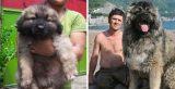 21 σπάνιες ράτσες σκύλων που δεν γνωρίζετε ότι υπάρχουν! Απλά δείτε την φατσούλα στο νο.14!