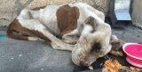 Αστυνομικοί στο Λος Άντζελες βρίσκουν ετοιμοθάνατο σκυλί σε πεζοδρόμιο και το σώζουν